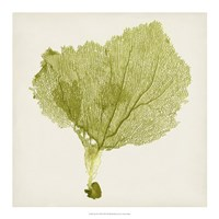 "Sea Fan VIII by Timothy O'Toole - 18"" x 18"""