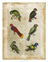 "22"" x 26"" Parrot Pictures"