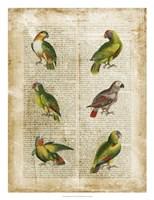 "Antiquarian Parrots II by Vision Studio - 22"" x 26"" - $34.49"