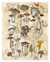 Mycological Study Framed Print