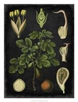 """Study in Botany IV by Vision Studio - 20"""" x 26"""""""