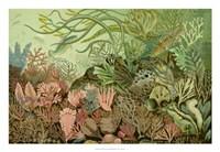 """Seaweed Panorama - 26"""" x 18"""""""