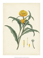 "Splendors of Botany I - 15"" x 20"", FulcrumGallery.com brand"