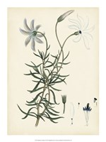 "Splendors of Botany II - 15"" x 20"", FulcrumGallery.com brand"