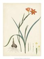"Splendors of Botany III - 15"" x 20"", FulcrumGallery.com brand"