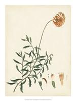 "Splendors of Botany IV - 15"" x 20"", FulcrumGallery.com brand"