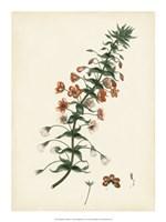 "Splendors of Botany V - 15"" x 20"", FulcrumGallery.com brand"