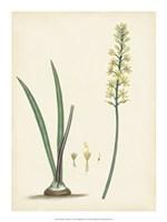 "Splendors of Botany VI - 15"" x 20"", FulcrumGallery.com brand"