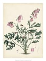 "Splendors of Botany VII - 15"" x 20"", FulcrumGallery.com brand"