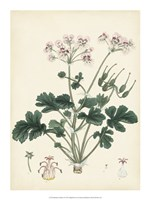 "Splendors of Botany IX - 15"" x 20"", FulcrumGallery.com brand"
