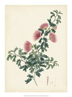 "Splendors of Botany X - 15"" x 20"", FulcrumGallery.com brand"