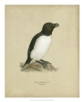 Antique Penguin I Framed Print