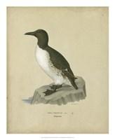 """Antique Penguin II by Von Wright - 18"""" x 22"""""""