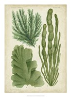 Seaweed Specimen in Green I Fine Art Print