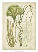 Seaweed Specimen in Green II Fine Art Print