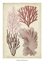 "Seaweed Specimen in Coral III by Vision Studio - 16"" x 22"""