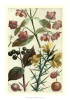 "Fruits & Foliage I by Vision Studio - 14"" x 20"""