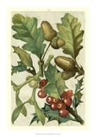 "Fruits & Foliage II by Vision Studio - 14"" x 20"""