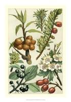 "Fruits & Foliage III by Vision Studio - 14"" x 20"""