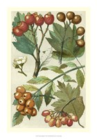 "Fruits & Foliage IV by Vision Studio - 14"" x 20"", FulcrumGallery.com brand"