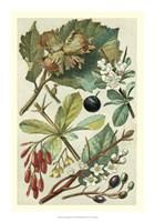 "Fruits & Foliage V by Vision Studio - 14"" x 20"", FulcrumGallery.com brand"