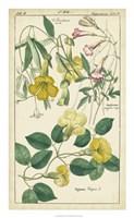 Spring Blooms II Fine Art Print