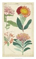 Spring Blooms III Fine Art Print