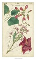 Spring Blooms IV Fine Art Print