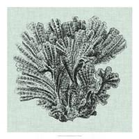 "Serene Coral I by Vision Studio - 20"" x 20"", FulcrumGallery.com brand"