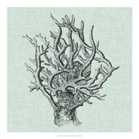 "Serene Coral II by Vision Studio - 20"" x 20"", FulcrumGallery.com brand"