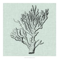 "Serene Coral III by Vision Studio - 20"" x 20"", FulcrumGallery.com brand"