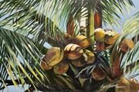 Los Cocos Fine Art Print