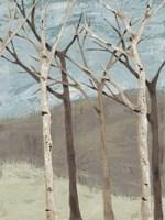 Blue Birches II Framed Print