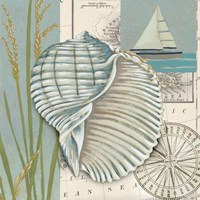 Seaside Shell I by Chariklia Zarris - various sizes
