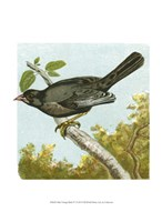 "Mini Vintage Birds IV - 10"" x 13"""