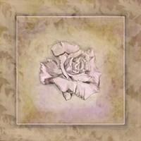 Rose Square I Framed Print