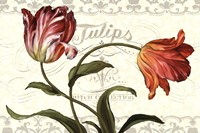 "Tulipa Botanica I Cream by Lisa Audit - 36"" x 24"""