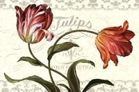 Tulipa Botanica