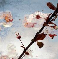 Blossom Morning 2 Fine Art Print