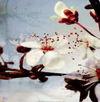 Blossom Morning 3 Fine Art Print