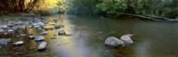 Kiewa River Fine Art Print