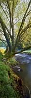 Snowy Creek Vert Fine Art Print