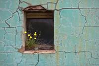 Window 3 by Wayne Bradbury Photography - various sizes