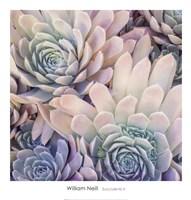 Succulents II Fine Art Print
