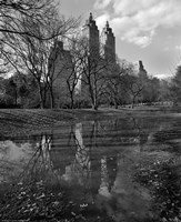 Central Park Reflections Fine Art Print