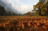 Meadow by Christopher Bliss - various sizes