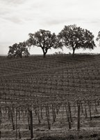 Paso Robles Toned Fine Art Print