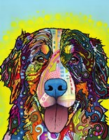 Bernese Mountain Dog by Dean Russo - various sizes