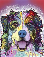Australian Shepherd by Dean Russo - various sizes - $36.49