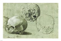 Study of Three Skulls Fine Art Print